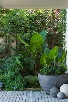 30 Gorgeous Tropical Garden Plants Ideas For You Home Decor - Garden Decor Small Tropical Gardens, Tropical Garden Design, Small Courtyard Gardens, Tropical Landscaping, Tropical Plants, Backyard Landscaping, Outdoor Gardens, Tropical Decor, Tropical Interior