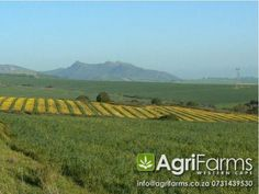 Lifestyle, wine and livestock farm for sale around Malmesbury in the West Coast district of the Western Cape Start your own boutique lifestyle cellar. Livestock Farming, Windmill, West Coast, Farms, Westerns, Vineyard, Cape, Africa, Lifestyle