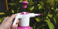 Jardinage biologique : Le savon noir contre les pucerons et les cochenilles !