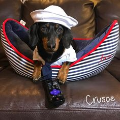 """""""Lately I've been 'sailing' through all my favorite TV shows like…"""" ~ Crusoe"""