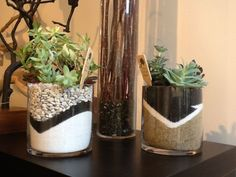 Succulents planted in clear glass vases. Black & white sand in glass container. Plant succulent in dirt in smaller pot, then place small pot in the sand in bigger, glass, see-through container. Succulent Gardening, Garden Terrarium, Succulent Terrarium, Container Gardening, Succulents In Containers, Cacti And Succulents, Planting Succulents, Planting Flowers, Air Plants