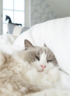 """A cat will allow you to sleep on the bed--on the edge."" --Jenny DeVries"