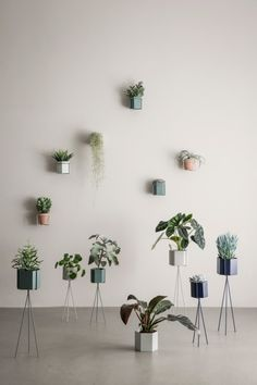 Shop for ferm LIVING Hexagon Pot from Modern Karibou. Choose other household items from the largest online collection of ferm LIVING products in Canada. Tall Plants, Large Plants, Green Plants, Potted Plants, Indoor Plants, Hoya Plants, Indoor Garden, Plant Box, Plant Wall