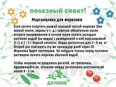 Одноклассники Eco Garden, Small Farm, Green Life, Growing Plants, Rubrics, Agriculture, Vegetable Garden, House Plants, Helpful Hints