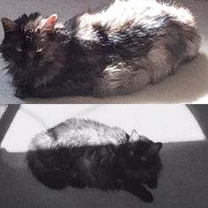 Belle and her sunbeam. Pretty kitty!
