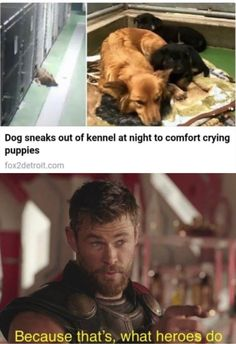 Goodest of bois -- #funny #funnymemes #funnypictures #funnyquotes #funnyanimals #jokes #funnytexts #topmemesclub