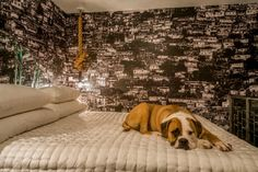 Designer to the stars Kari Whitman's home featuring a very cute pup and Favela wallpaper Design Museum, Wall Treatments, Decor Interior Design, Cute Puppies, Animal Print Rug, Digital, Wallpaper, Animals, Image
