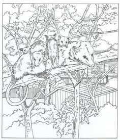 coloring page Nature around the house Kids-n-Fun