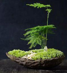 Asparagus fern and moss bonsai arrangement. Asparagus fern and moss bonsai arrangement. Garden Terrarium, Bonsai Garden, Garden Plants, Moss Terrarium, House Plants, Mini Zen Garden, Indoor Garden, Garden Art, Balcony Garden