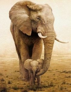 Mother and baby African elephants - THIS IS EXACTLY HOW I WANT MY THIGH TATTOO <3