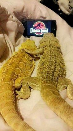 Cute Funny Animals, Funny Animal Pictures, Cute Baby Animals, Cute Cats, Cute Reptiles, Reptiles And Amphibians, Bearded Dragon Funny, Cute Lizard, Chameleon