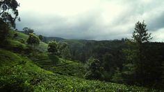 Tea Estates Nuwara Eliya Sri Lanka