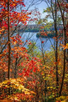 ***Autumn forest framing lake view (Algonquin Park, Ontario) by Elena Elisseeva