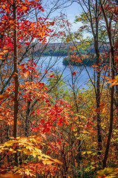 ***Autumn forest framing lake view (Algonquin Park, Ontario) by Elena Elisseeva E