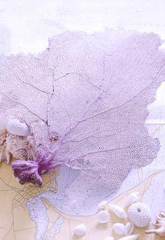 Delicate Lavender Sea Fan