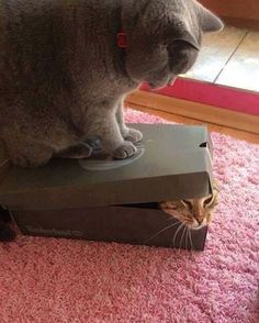 """""""Mi piace"""": 9,357, commenti: 222 - For The Cat Lovers (@catboolove) su Instagram: """"😬"""""""