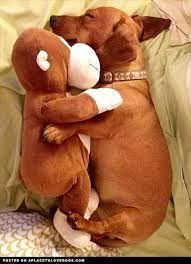 Best pals @Poppy Treffry #bedachshing