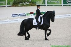 Photos - Alltech FEI World Equestrian Games 2014 in Normandy