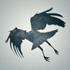 I had a crow when I was a girl - or did the crow have me? The Crow, Wild Life, Beautiful Creatures, Rabe Tattoo, Rachel Brice, Quoth The Raven, Raven Art, Jackdaw, Crows Ravens