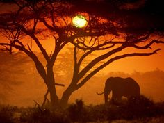 tree landscapes - African sunset