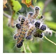 Cucumbers will rid your home of ants...and other natural remedies for insect control.