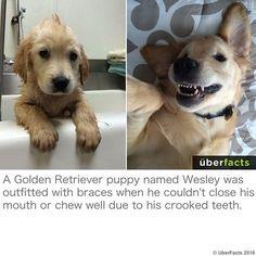 Yep... a puppy with braces :)  http://abcnews.go.com/Li…/doggie-dentist-pooch-braces/story…  **Feel free to Friend or FOLLOW ME. I am always posting awesome stuff!** https://www.facebook.com/bobbiecooper63