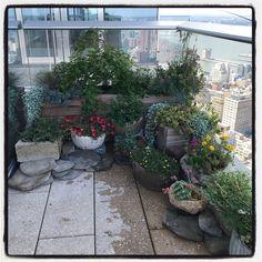 """Polux Fleuriste on Instagram: """"NYC skyscraper gardens"""" Balcony Plants, The Outsiders, Nyc, Instagram, Balcony Planters, New York"""