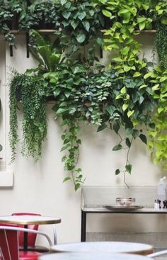 Vertical Garden Plants, Balcony Plants, Bright Flowers, Small Flowers, Flower Plants, Cactus Flower, Design Jardin, Garden Design, Garden Floor