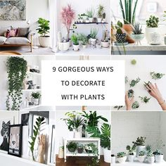 9 Gorgeous Ways to Decorate With Plants http://thenectarcollective.com/2014/10/decorate-with-plants/ #plants #decor #home