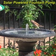 This fountain kit makes an affordable and efficient pump that requires no electricity or batteries, as it runs on solar power alone! ideas decoration decor Last OFF-Solar Powered Fountain Pump Front Yard Landscaping, Backyard Patio, Backyard Ponds, Diy Patio, Diy Yard Decor, Shade Landscaping, Landscaping Edging, Budget Patio, Landscaping Jobs