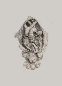 anatomy, art, heart