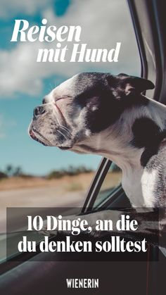 Traveling with your dog - you shouldn't forget that wienerin - Reisen mit Hund – das solltest Du keinesfalls vergessen Pet Dogs, Dogs And Puppies, Pet Gate, Dog Travel, Train Travel, Dog Training, Training Pads, Dog Love, Dog Tags