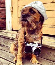 Hipster Border Terrier, haha