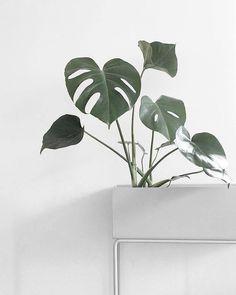 Beistelltisch, Raumtrenner und Pflanzenbehälter in einem: Das Multitalent aus pulverbeschichtetem Stahl ist dank des schlichten Designs vielseitig einsetzbar. Hier entdecken und shoppen: http://sturbock.me/3Vp