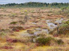 Kurjenrahkan kansallispuisto (Kurjenrahka National Park) 28.9.2013 8:19. Vajosuo.