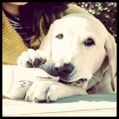 my puppy loves caramel macchiatos just like me. #mochatini #yellowlab my puppy dexter #ManviDrona