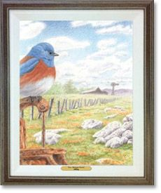 Western Serenity—Western Bluebird #bwdgallery