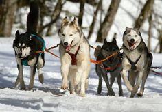 Agility, Discdogging, Mushing, Dogscooter. Hundesport ist im Trend. Sportarten mit Schwerpunkt Zughundesport jetzt im DOG FIT Magazin.