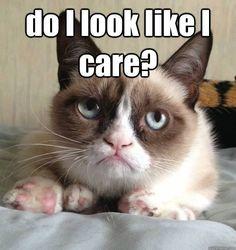 Grumpy Cat: Do I look like I care? #cats #humor #grumpy
