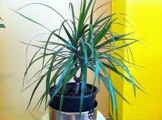 Wie heisse ich?? :: Das große Lexikon der Zimmerpflanzen