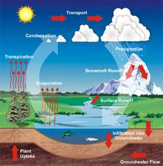 Image detail for -The major components of the hydrologic cycle are: