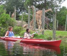 Kayak adventure a lesson in zoo-ology  Brevard Zoo features up-close tours around wild animal exhibits