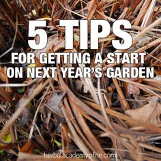 5 Tips for Getting a Start on Next Year's Garden this fall.