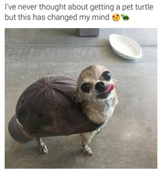 Never knew turtles could be so kewt by boisobscur