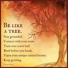 Be like a tree. Stay grounded. Connect with your roots. Turn over a new leaf. Bend before you break. Enjoy your unique natural beauty. Keep growing. #naturalparentingthoughts