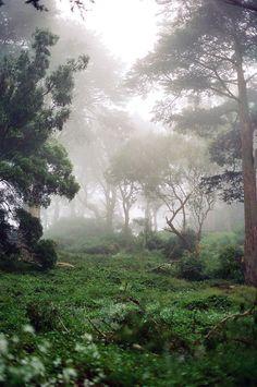 Forest | Rivkah Khanin.