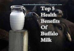 Top 5 Health Benefits Of Buffalo Milk