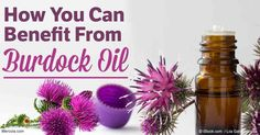 Discover how burdock oil benefits your hair health, plus learn about its other uses, composition, and how to make burdock oil at home. http://articles.mercola.com/herbal-oils/burdock-oil.aspx