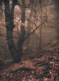 Brown/ Magic Forest in Crimea by Arsenii Gerasymenko on 500px
