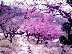 Road pink